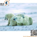 PET 3D Picture of Animal Animation (China)