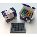 Human Insulin Fret-Pincer® Assay Kit (USA)