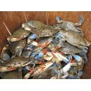 Fresh Frozen and Live Mud/Red King/Soft Shell/Blue Crab (Thailand)