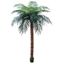 Imitation Palm Tree (Hong Kong)
